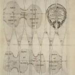 Globuskarte für einen Venusglobus, Rom, 1728